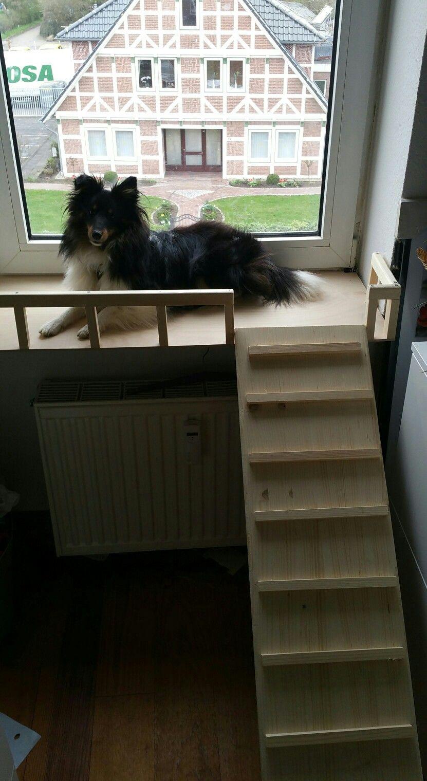 Hunde Balkon Diy Mobel Holz Mobel Holz Diy Mobel