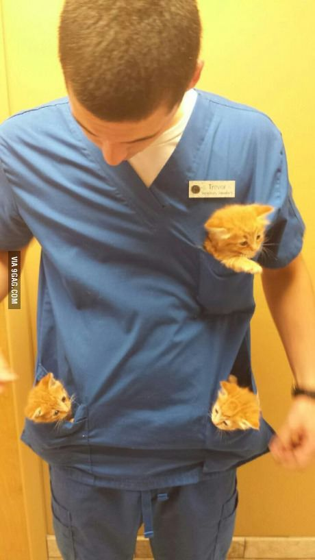 So my friend works at a animal hospital. I need this type of job in my life.