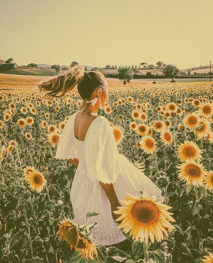 sunflowers sunflowerfields photoshoot photoideas