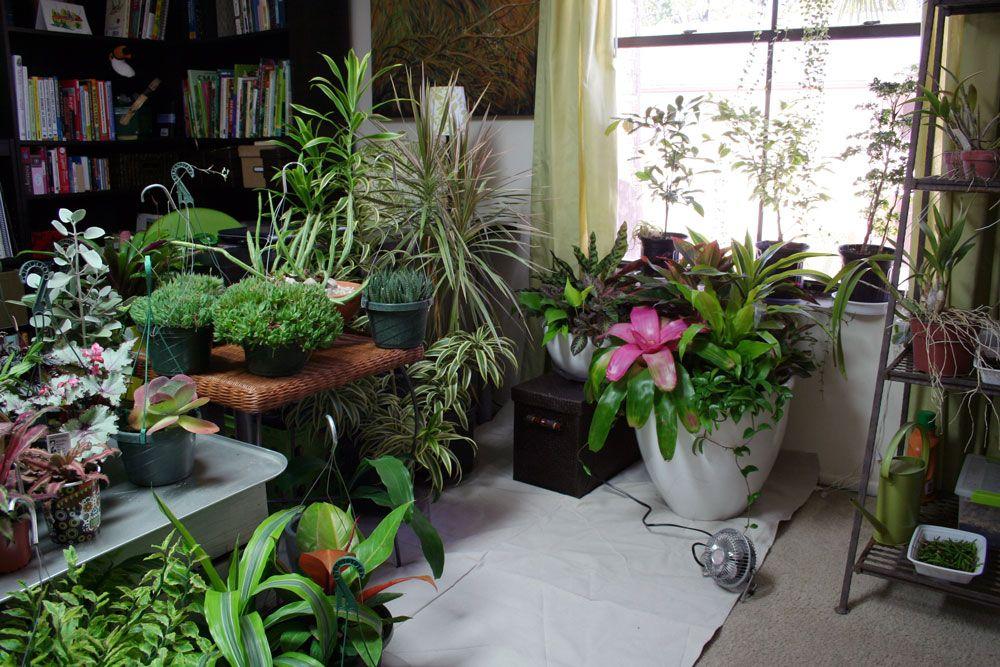 The Rainforest Garden: How to Plant a Garden... Indoors