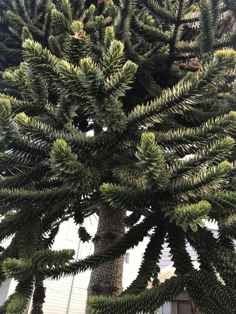 woodys tree service mackay