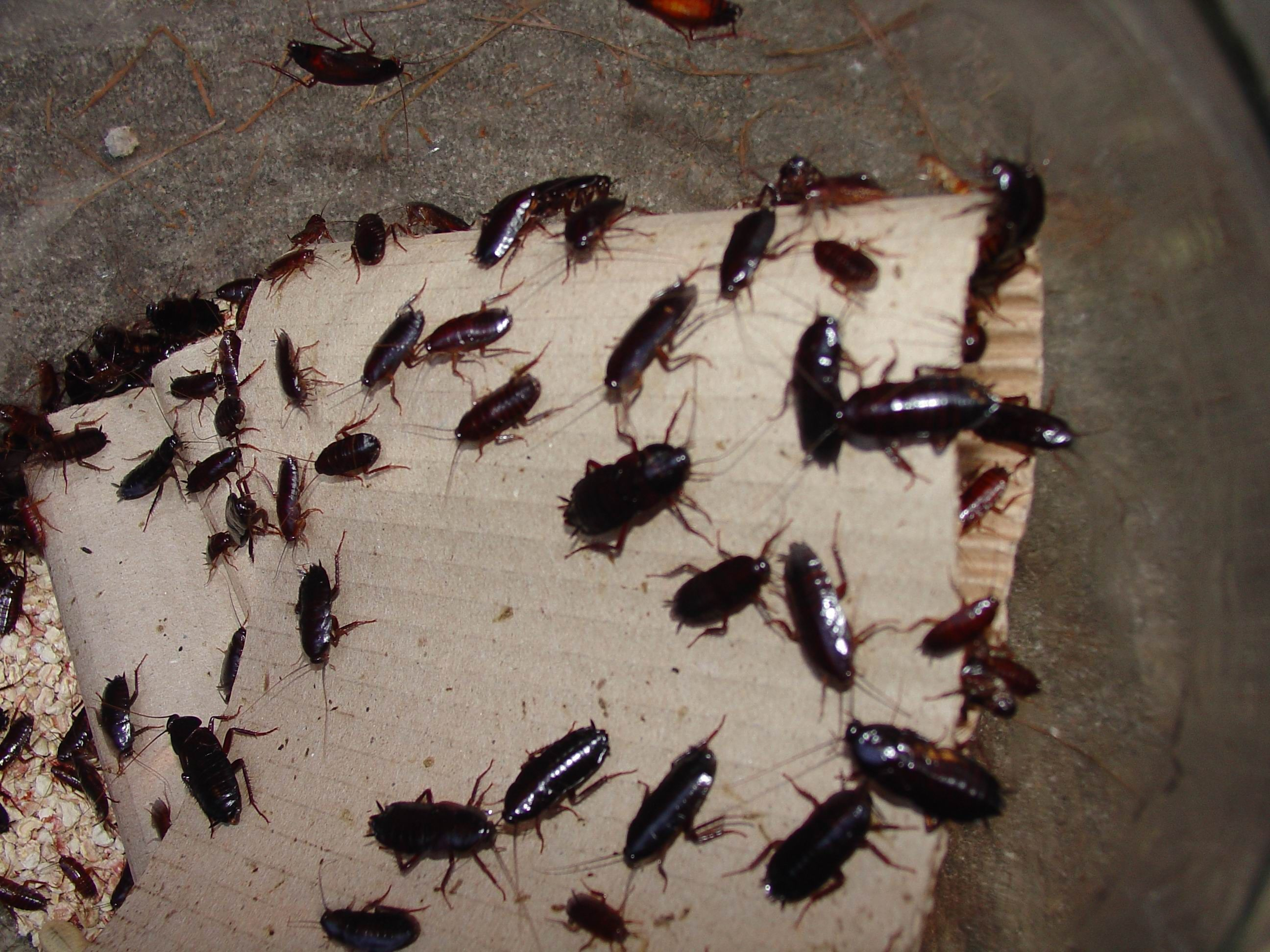 Pin by Trish Ayres on Homemade Stuff Diy pest control
