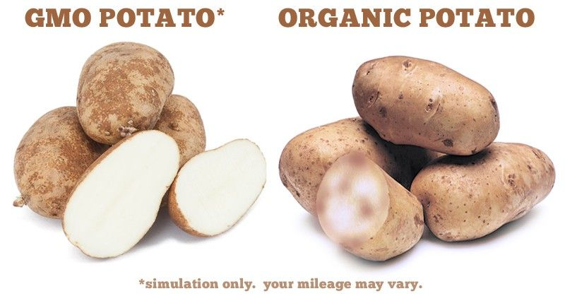 Would You Eat a Potato That Won't Turn Brown? GMO Potatoes