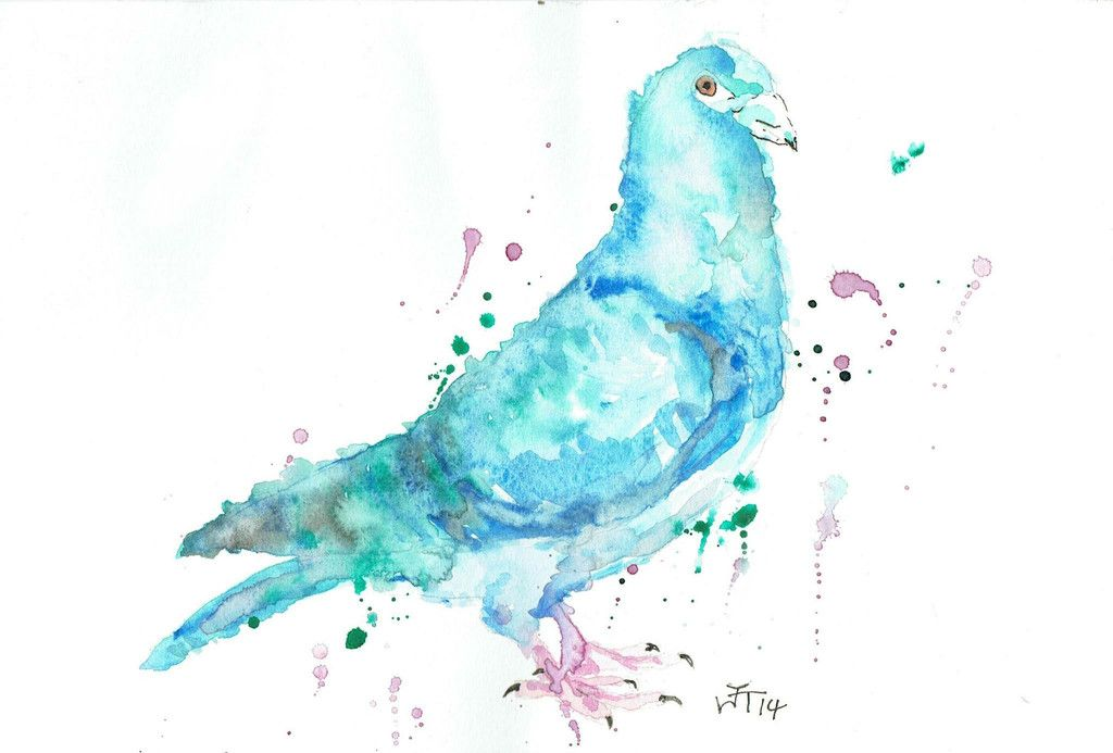"""Pete"" Pigeon print silk finish, canvas or Giclee 