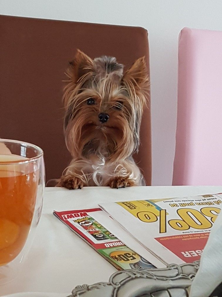 Pin by Carmen Garcia on Yorkies | Yorkshire terrier ...