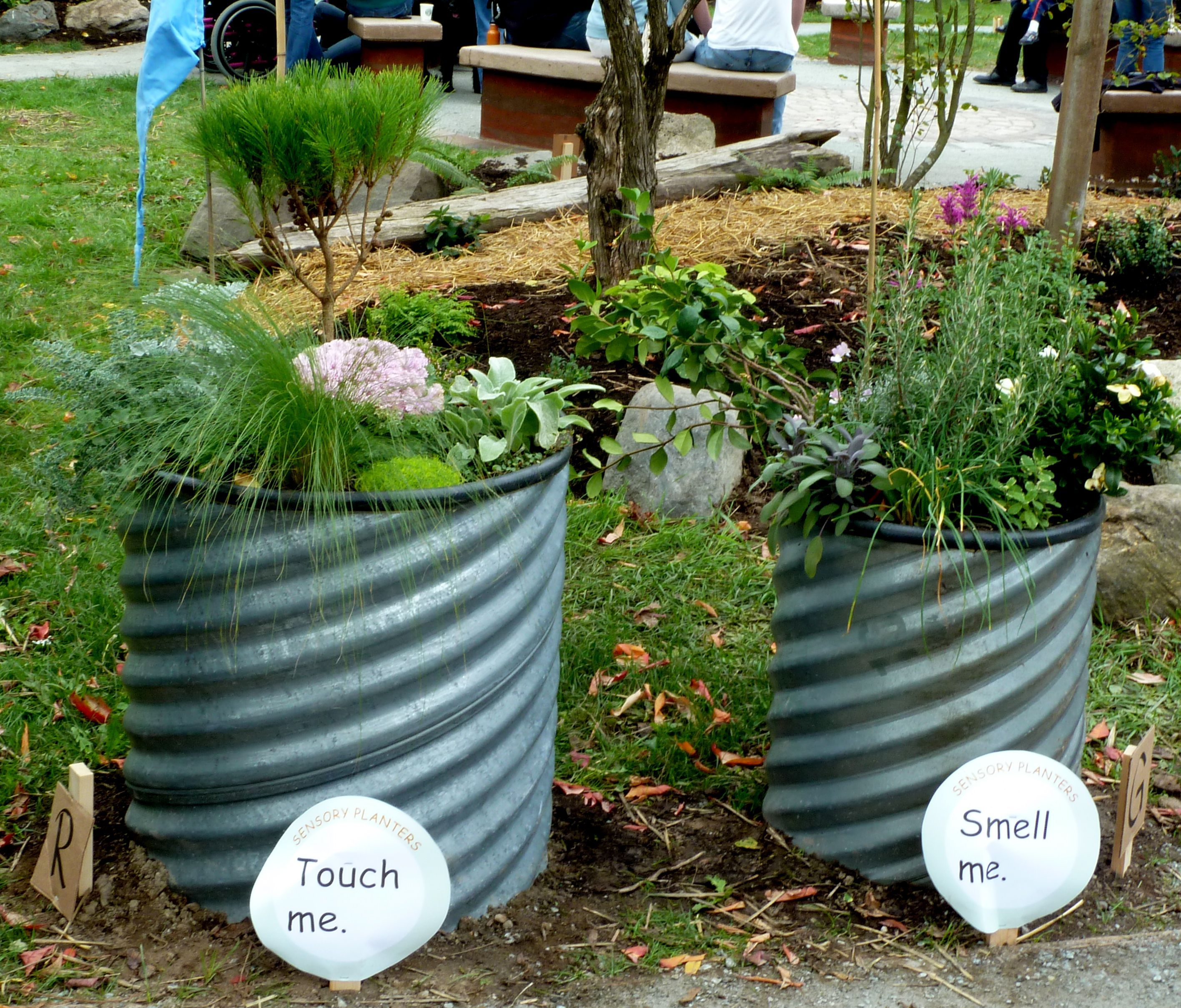 I love the idea of having different garden bedsbarrels for the