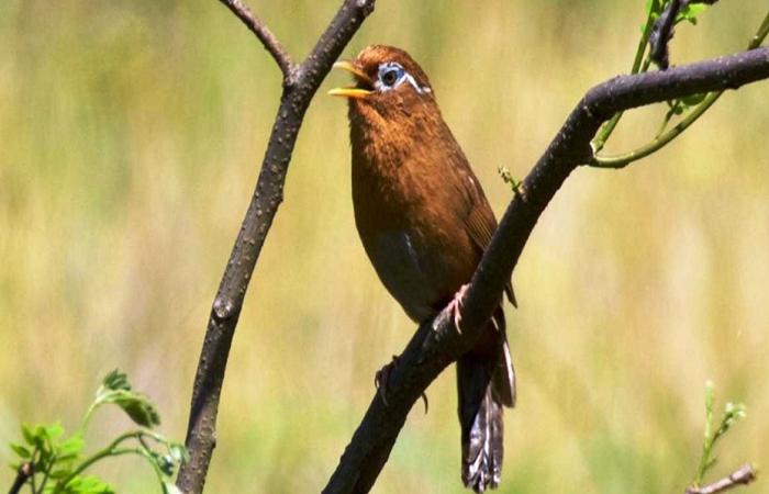 Pin Oleh Informasi Komunitas Kicau Mani Di Perawatan Burung Burung