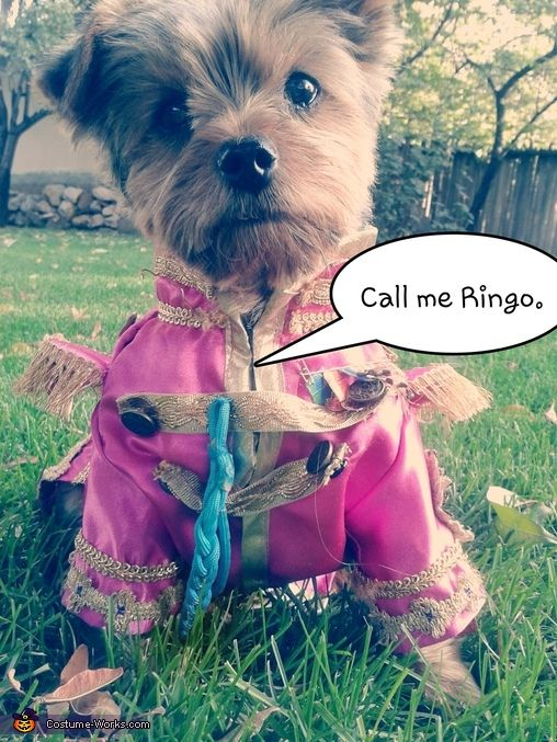 Sgt Pepper S Lonely Hearts Ringo Halloween Costume Contest At