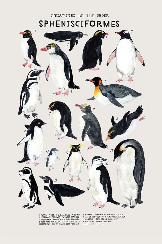 Creatures of the Order Sphenisciformes   Etsy