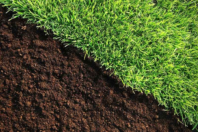 Why When And How To Apply Lime To Your Lawn Lawn Soil Lawn Fertilizer Weeds In Lawn