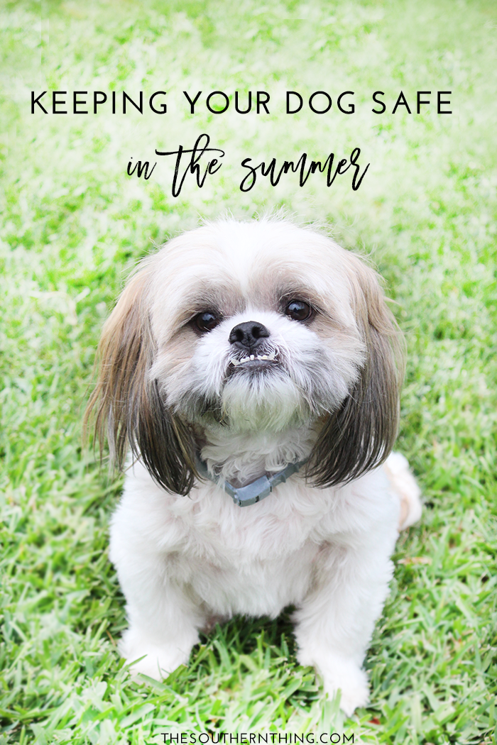 Keeping Your Dog Safe In The Summer Dog Safety Pet Insurance