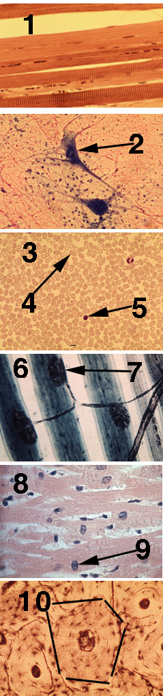 Games For Anatomy Microscopic Slides Science Pinterest
