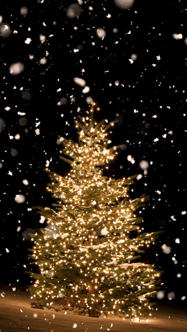Wallpaper iPhone # holidays #winter#christmas tree⚪️ - #holidays #iphone #Tree #Wallpaper #winterchristmas #christmaswallpaperiphone
