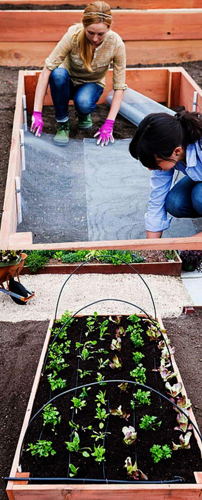 Garden Landscape Design Ideas Australia concerning Organic