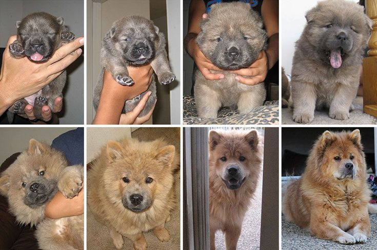 35 Before and After Pictures of Dogs Growing up  Dogs Funny Dogs Cute Dogs Dogs Videos