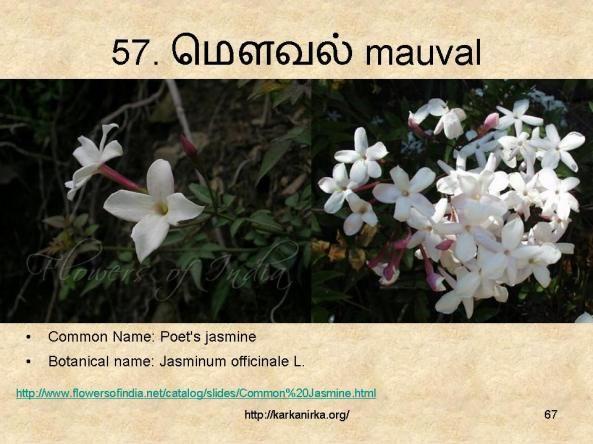 57 ம வல Mauval Flowers Nature Flower Names Coconut Flower
