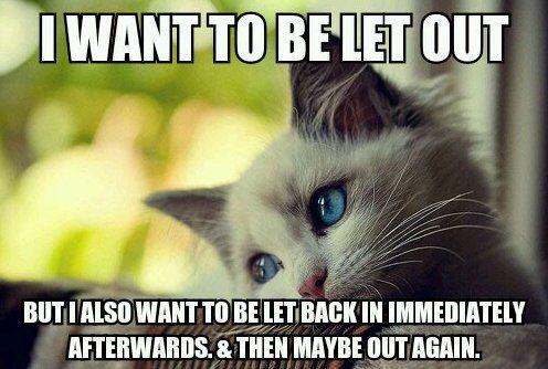 #Kittenlogic