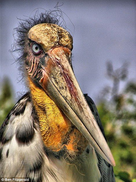 World's 100 most unique and endangered birds revealed #prehistoriccreatures The incredible greater adjutant, looking like a prehistoric creature, is one of the birds ... #prehistoriccreatures