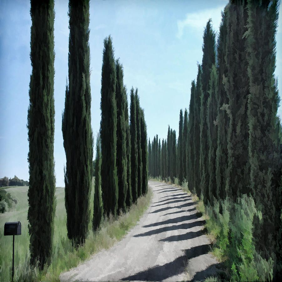 What Are The Tall Skinny Trees In Tuscany Google Search