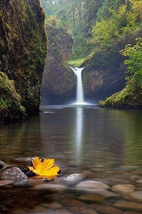 Punch Bowl Falls es una cascada en Eagle Creek en el área panorámica nacional del desfiladero del río Columbia, Oregón, Estados Unidos. #landscapepics