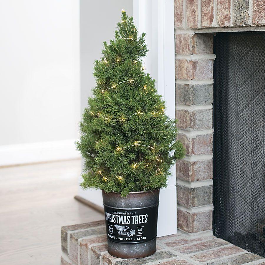 14+ Diy christmas tree stand bucket ideas