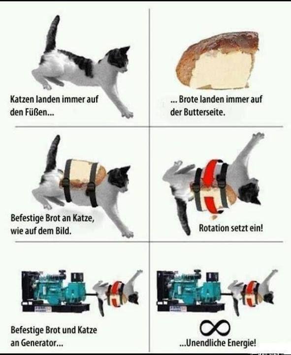 Katze, Butter, Toast