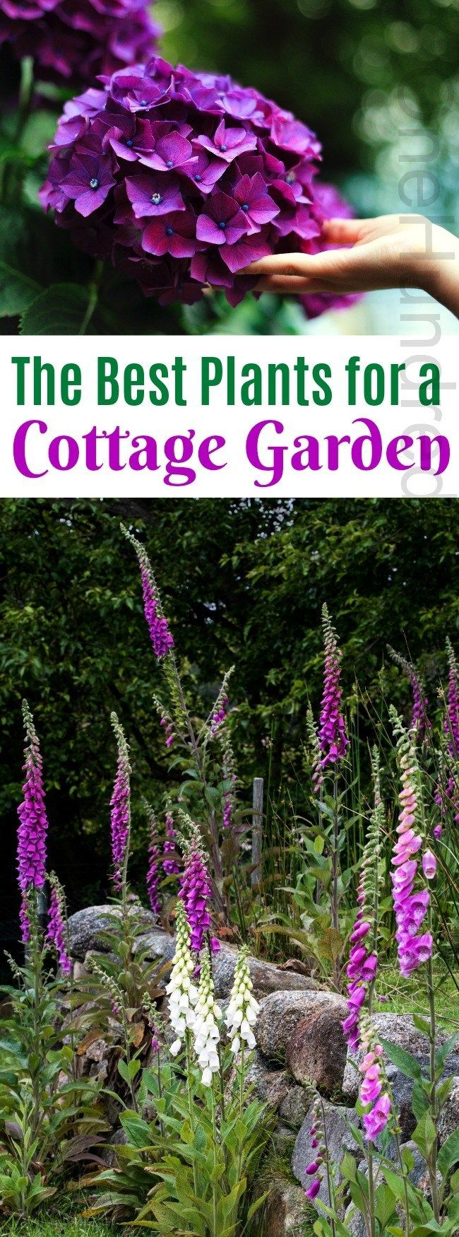 The Best Plants for a Cottage Garden - One Hundred Dollars a Month #cottagegardens