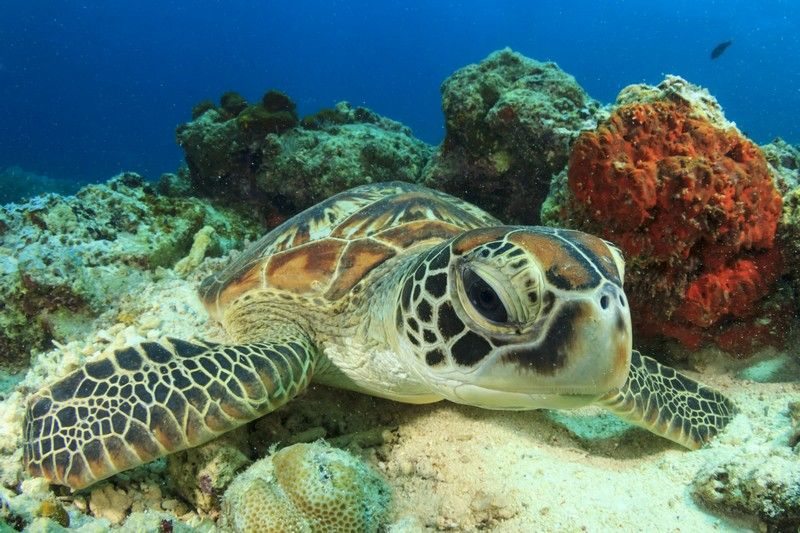 #1 What species live in and around the Reef?