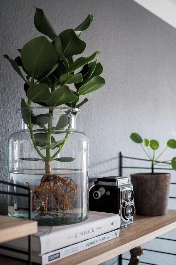 Water Plants, der neue Pflanzentrend Plants, Decor styles and