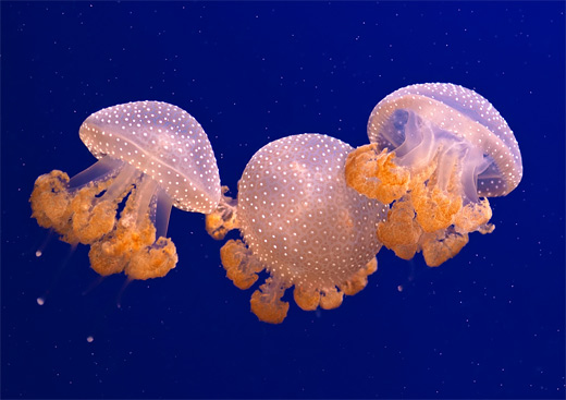 45 Magnificent Examples of Jellyfish Photography | Naldz Graphics