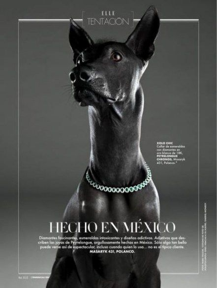 Super fashion editorial layout magazine typography 51+ ideas #editoriallayout