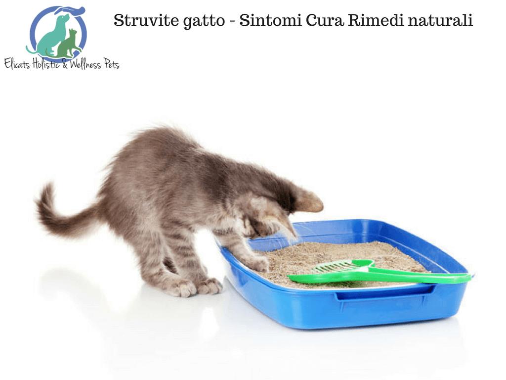 Struvite gatto sintomi Rimedi naturali, erba spaccapietra per gatti cura calcoli di struvite nel gatto, i nutraceutici e la terapia Home Care, low magnesio