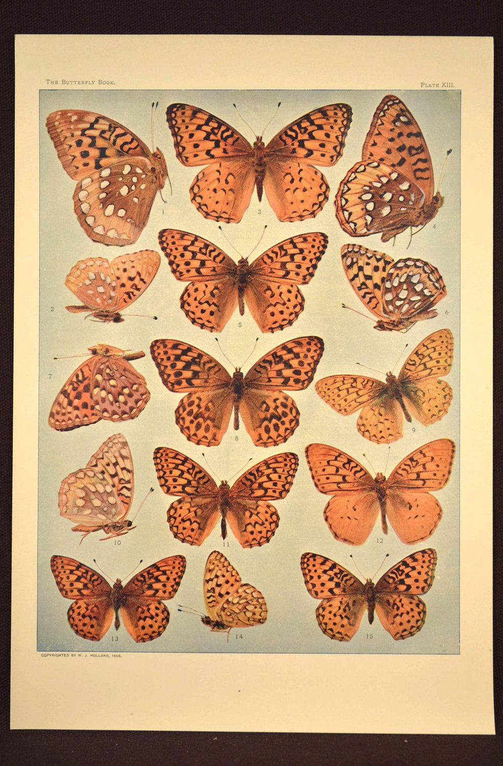 Antique Print Butterflies Butterfly Wall Art Nature Decor | Nature ...