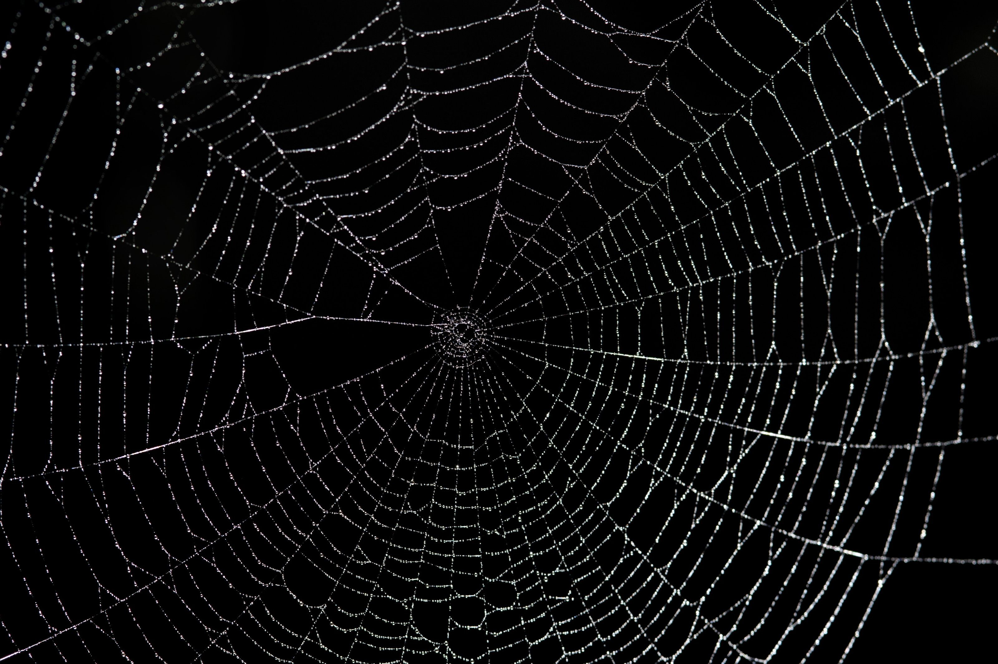 Spiders Web On Black Jpg Jpeg Image 3200 2129 Pixels Scaled 30 Hd Wallpapers For Mac Amazing Hd Wallpapers Spider Web