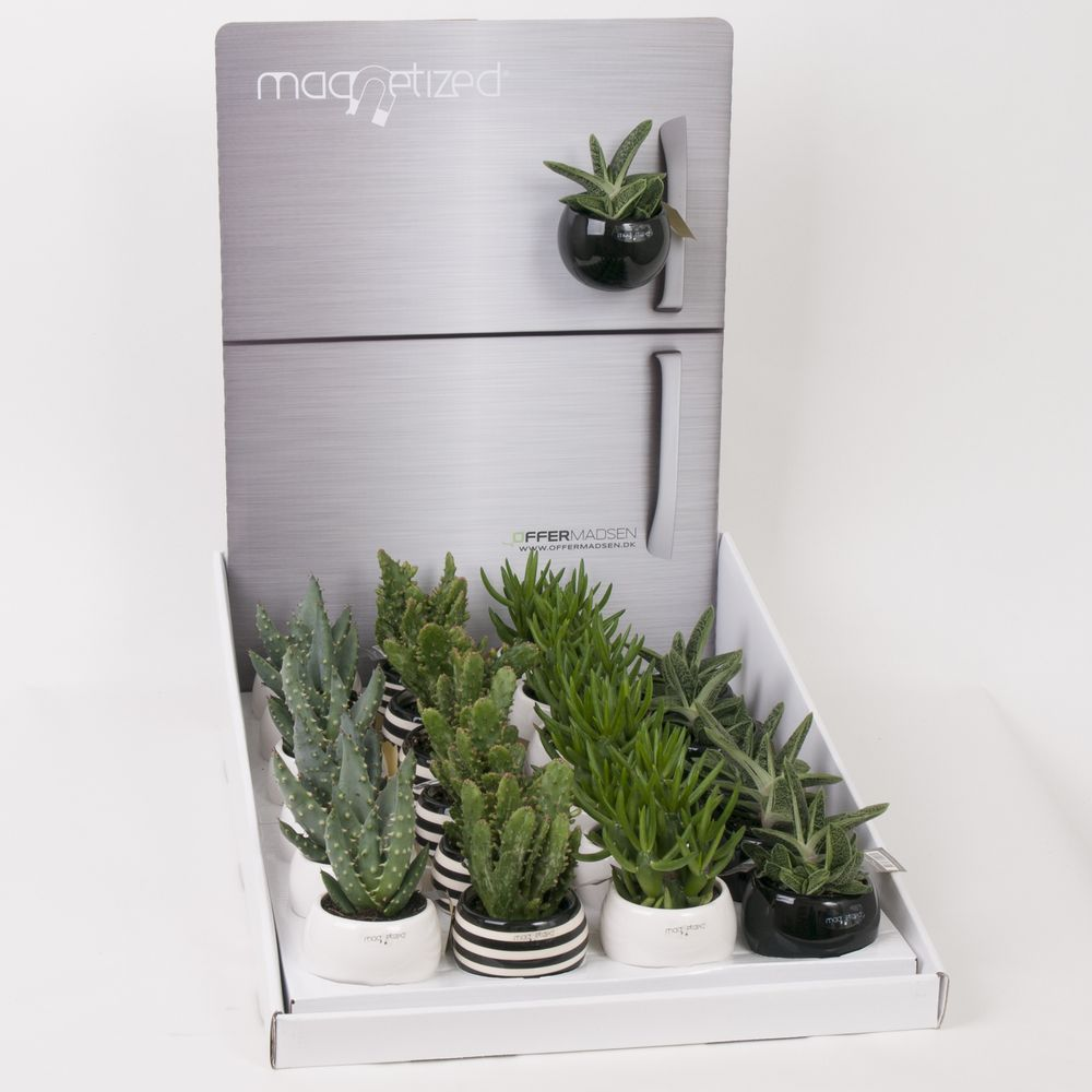 Magnetic Succulent Plant Gifts - Best4Garden Online Gift Plants