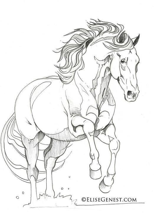 Andalusian color sheet | coloring | Pinterest | Caballos, Dibujo y ...