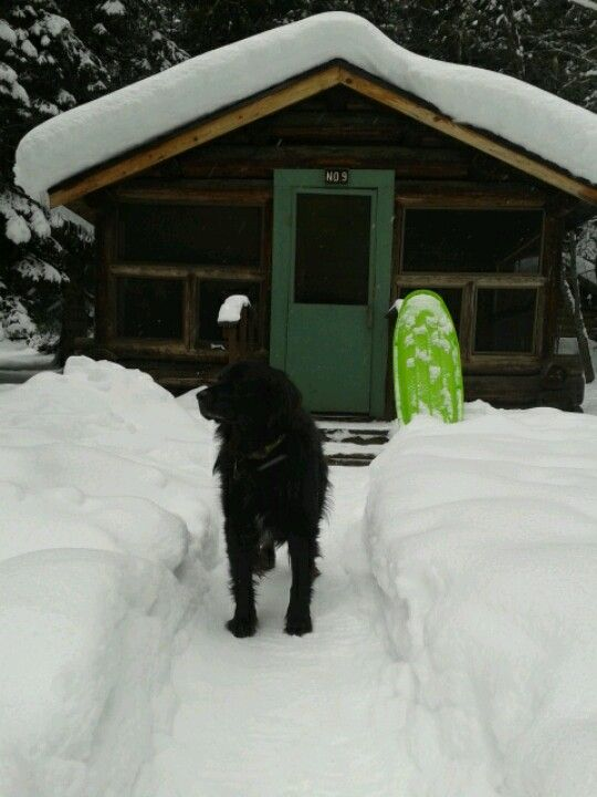Cabin in powell, idaho