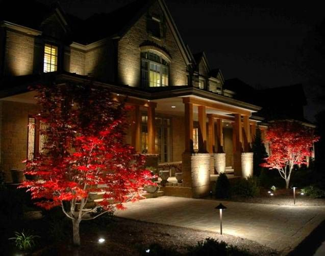 Image result for japanese maple lighting & Image result for japanese maple lighting | Frank | Pinterest ...