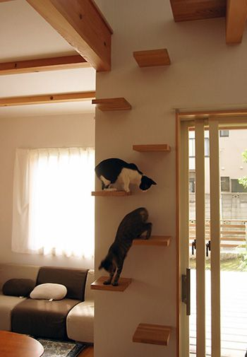 猫と暮らす家 Nld Diary 猫と暮らす 猫の家具 リノベーション 猫