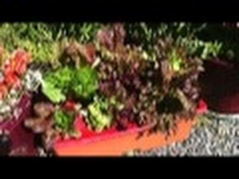 Four Season Garden #4: Planting Lettuce In An EarthBox