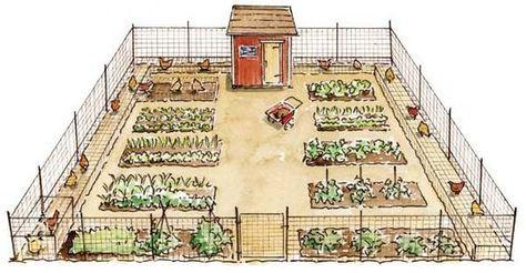 Backyard Chicken Runs and Designs around the Garden