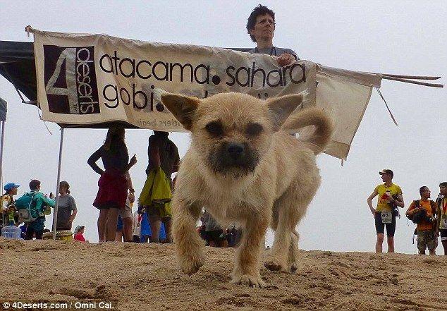 Athlete who met a dog on an ultramarathon is bringing her