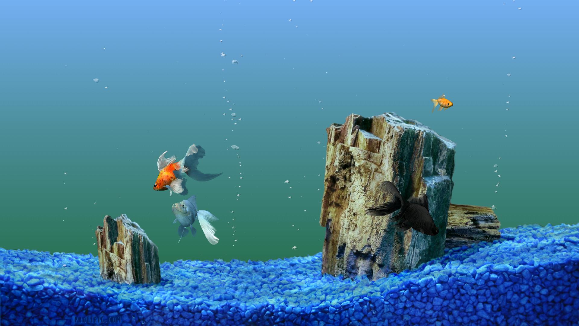 Hd Animated Fish Tank Wallpaper Dowload