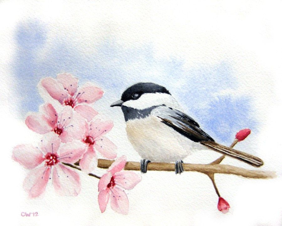 Chickadee In Cherry Blossoms Inch Signed Fine Art Print Pink And Blue Home Decor Bird Art