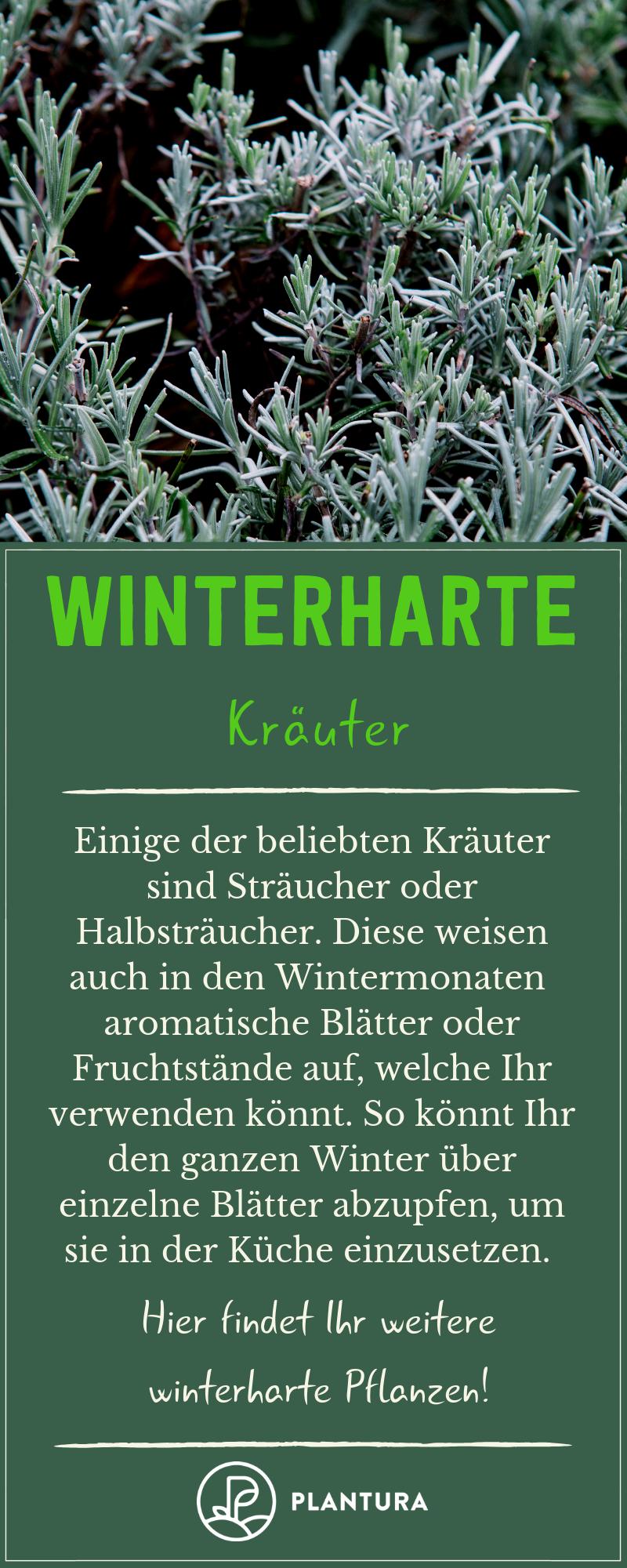 Winterharte Pflanzen: Die besten Arten für den Garten