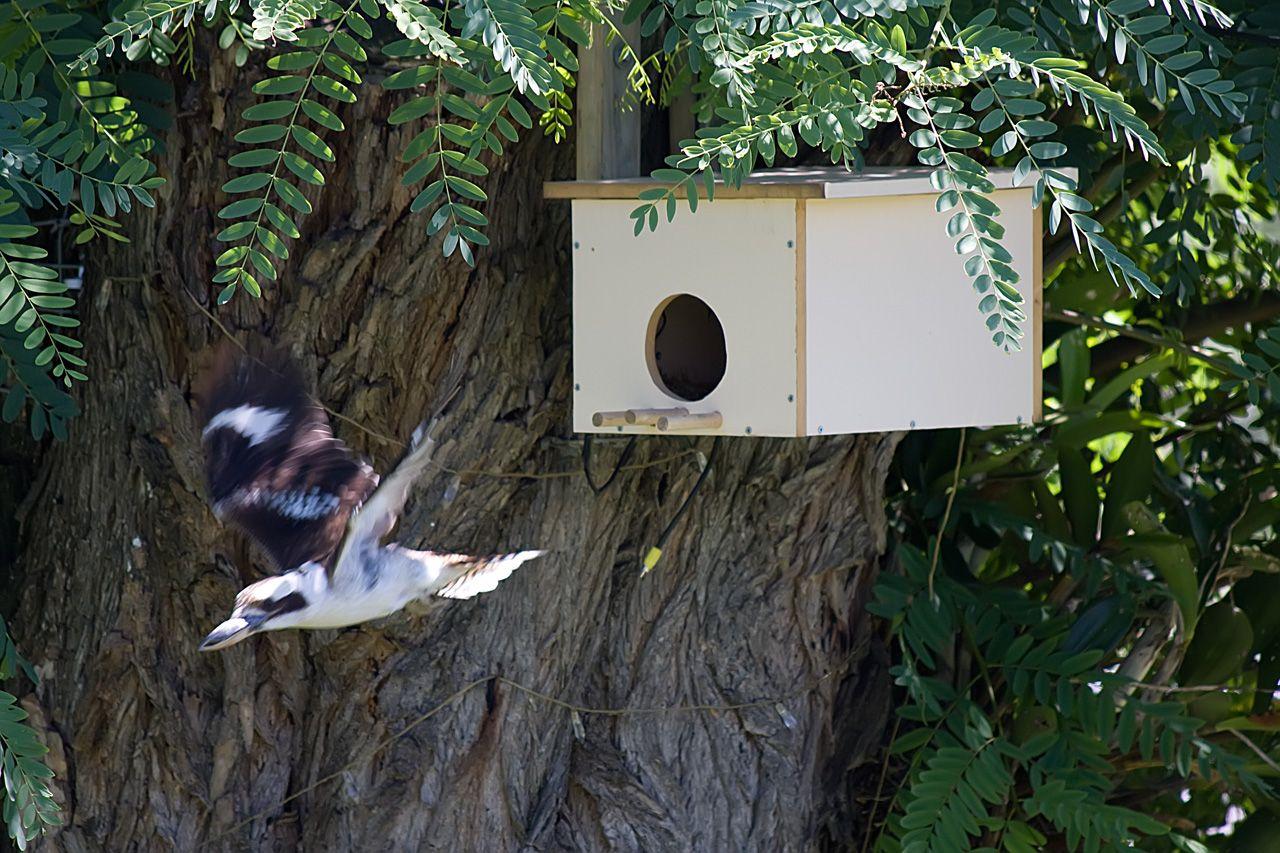 Nest Boxes | Nesting boxes, Australian native birds, Bird ...