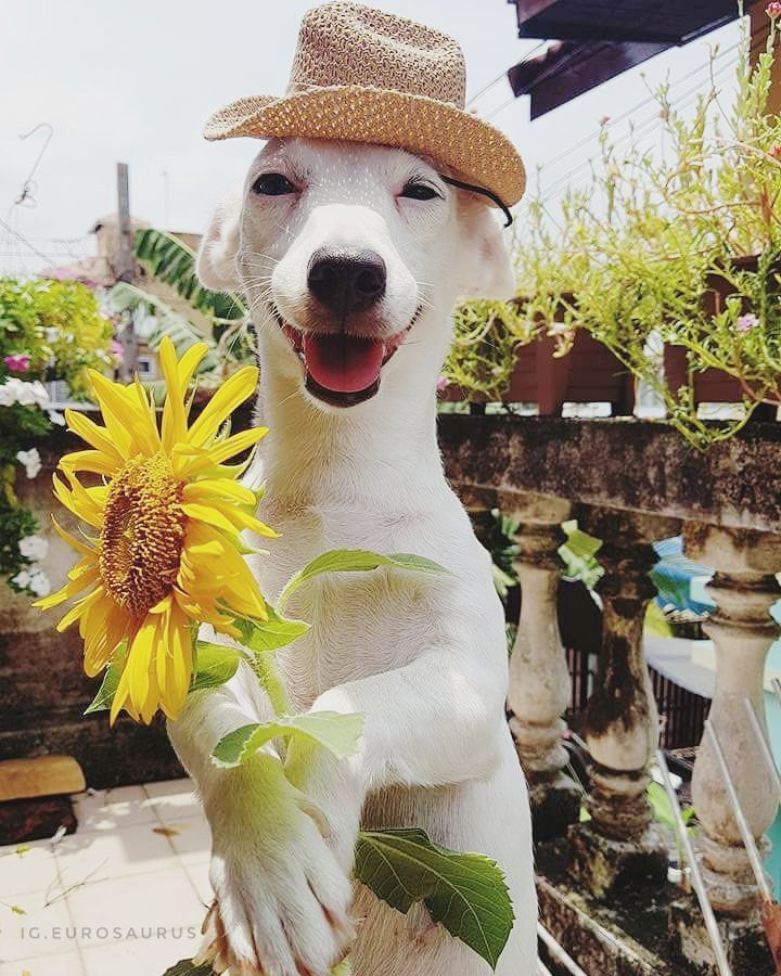 Monday morning Happy animals, Cute dogs, Animals beautiful