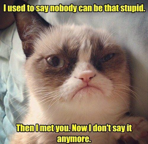 Grumpy Cat Mean Memes Grumpy Cat Humor Funny Grumpy Cat Memes Grumpy Cat Meme