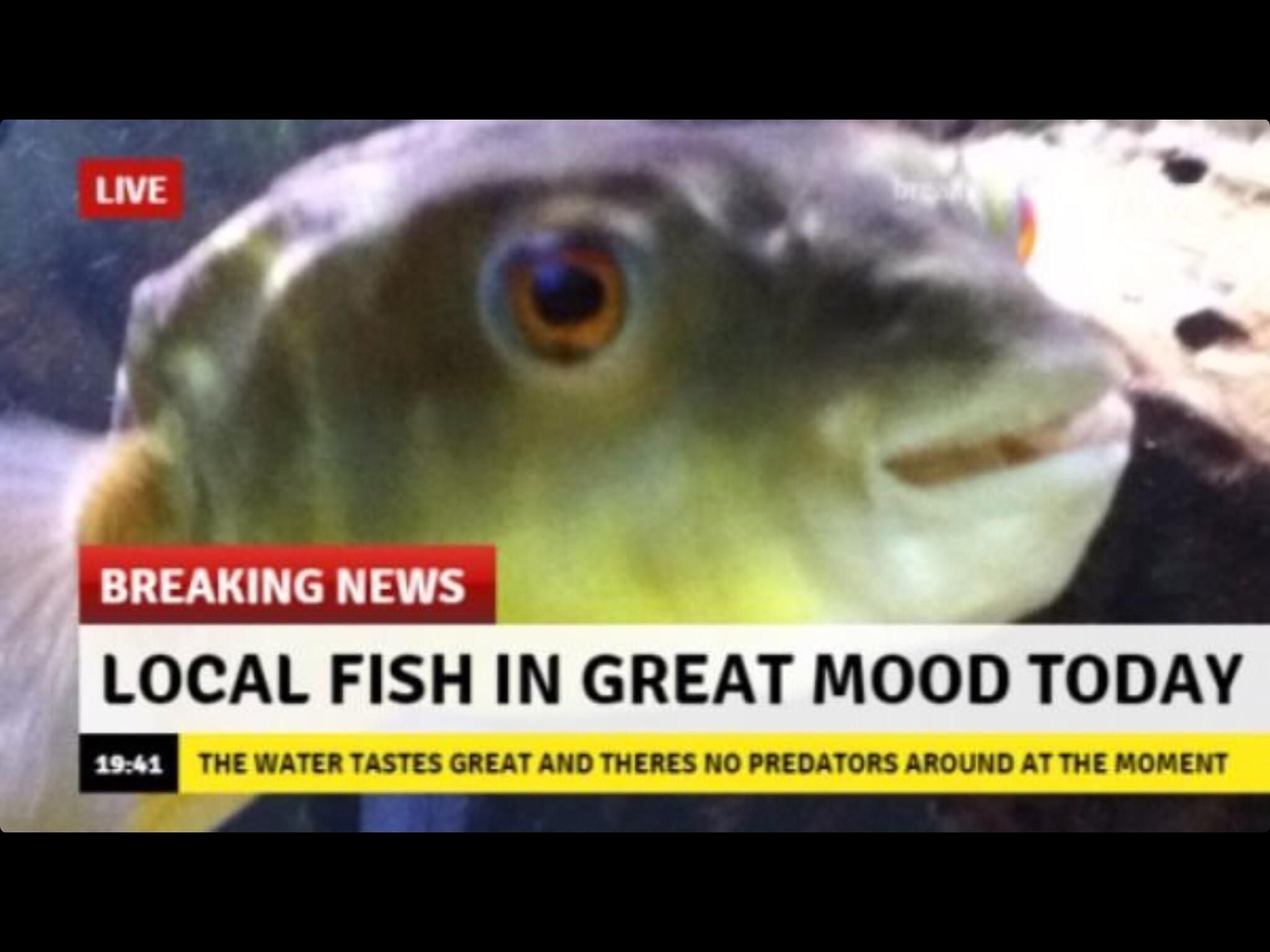 Keep Up The Good Work Fish Memes Fishing Memes Best Funny Pictures Wholesome Memes