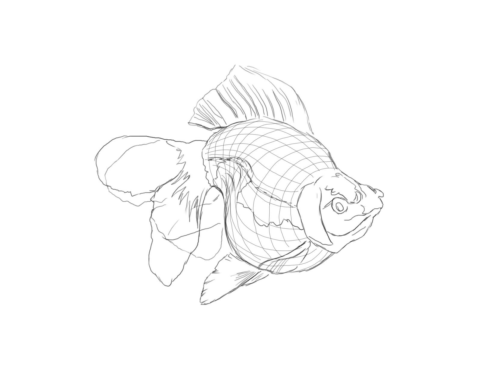 pencil drawings of fish traced and cleaned the line for painting